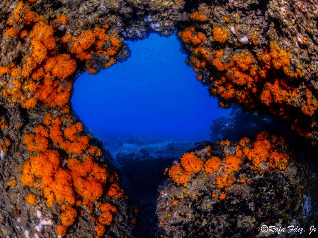 Astroides calicularis