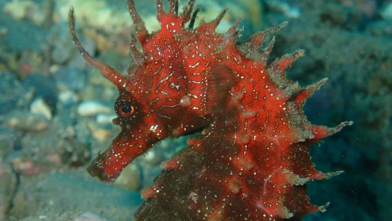 Caballitos de Mar. Seres Fascinantes del Mundo Submarino