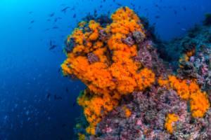 coral-naranja