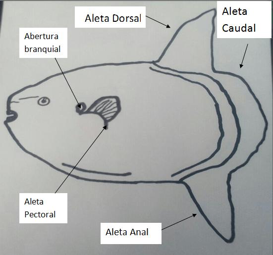 pez-luna-partes
