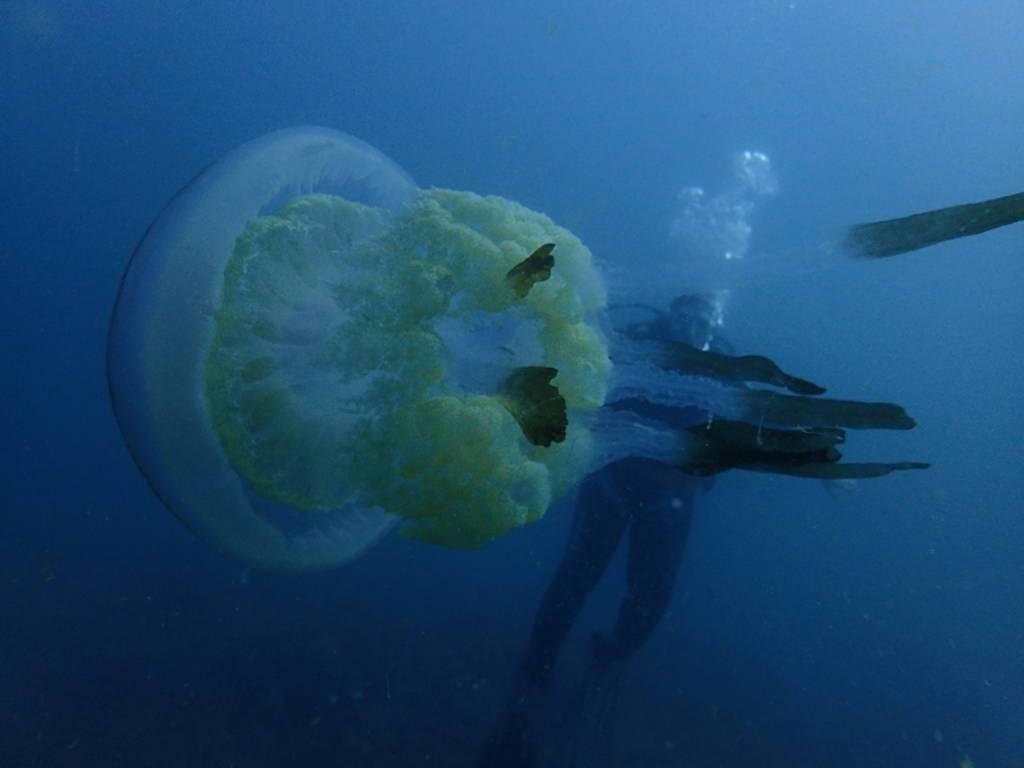 medusa-maro-cerro-gordo-la-herradura