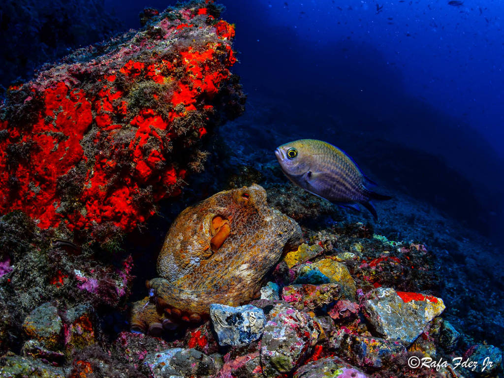 punto-inmersion-piedra-de-la-gorra